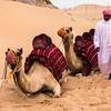 The Desert Safari in The United Arab Emirates.