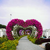 Miracle Garden in Dubai, UAE