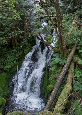Washington State #1