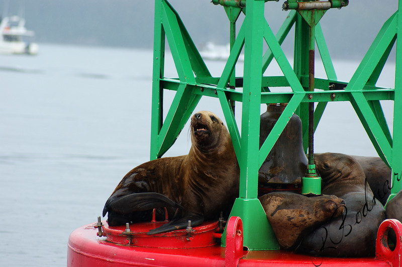 Photo By Robert Bodnar........Seals Saying Hi!!!