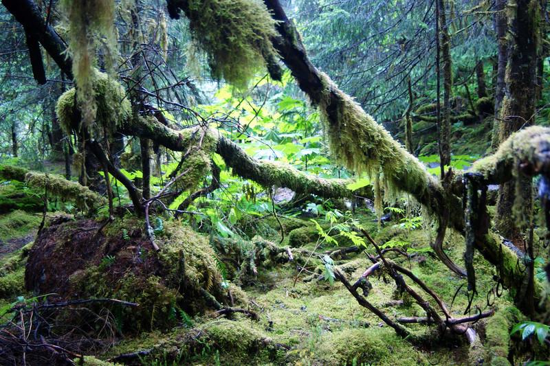 Photo By Robert Bodnar....... Alaska Rain Forest,  Juneau Alaska