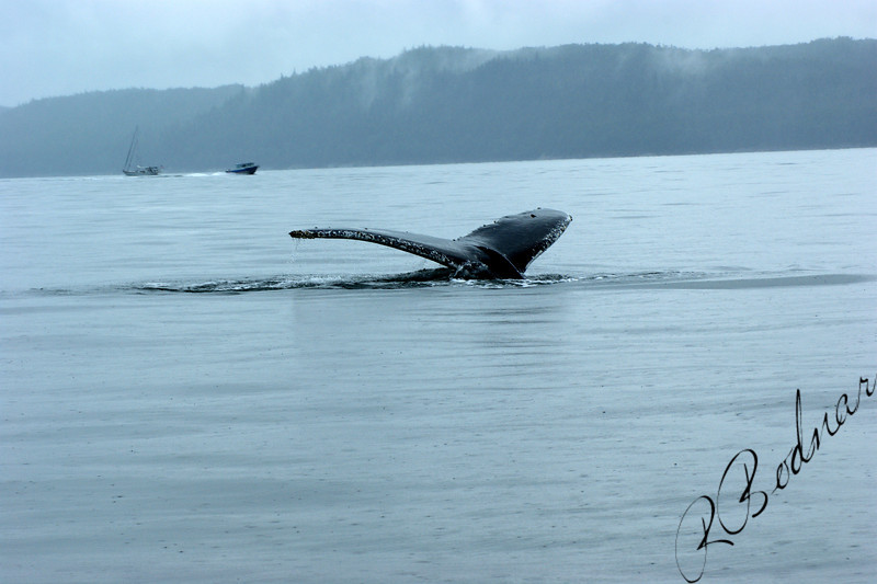 Photo By Robert Bodnar....Whale Tail