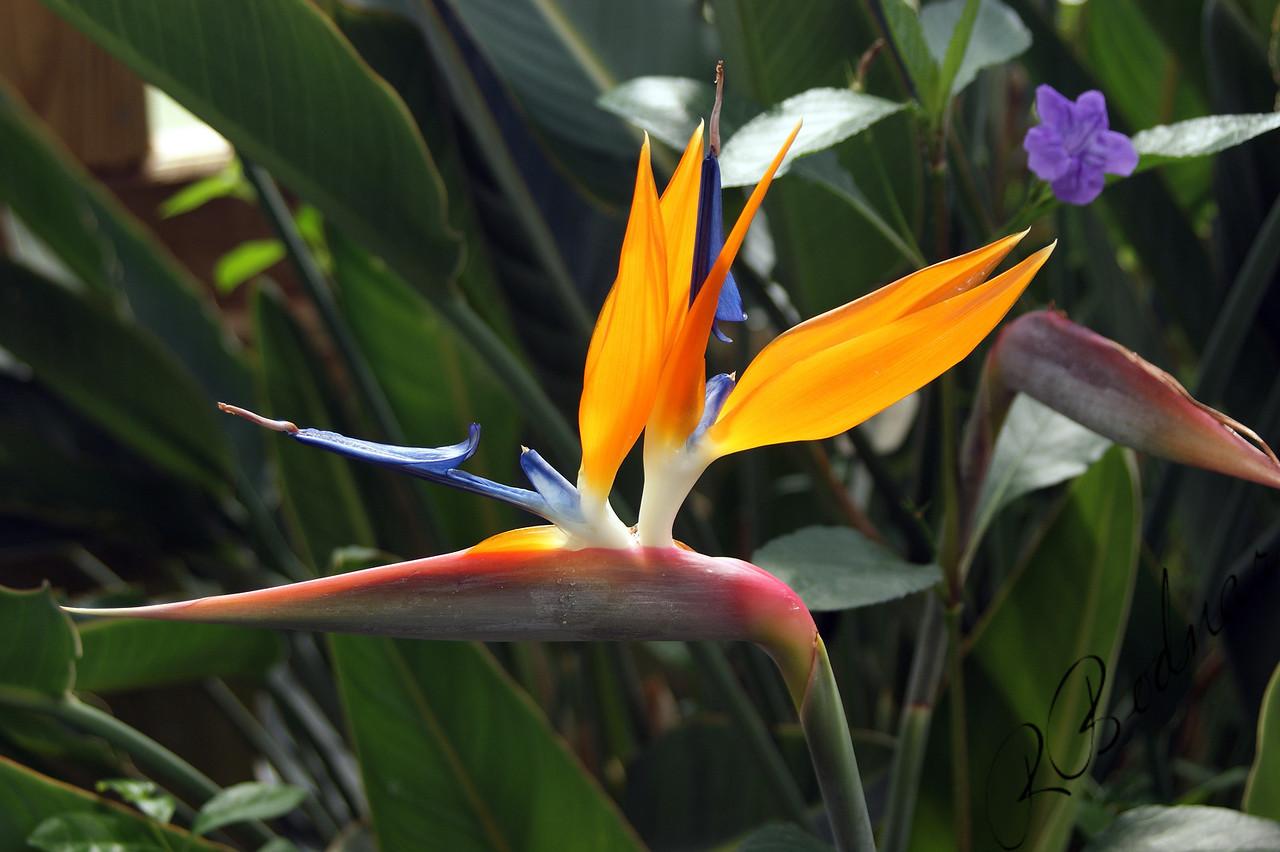 Photo By Robert Bodnar.................Just a Beautiful Flower