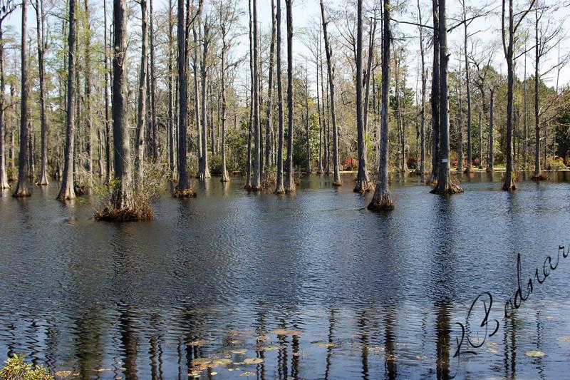 Photo By Robert Bodnar........................Swamp