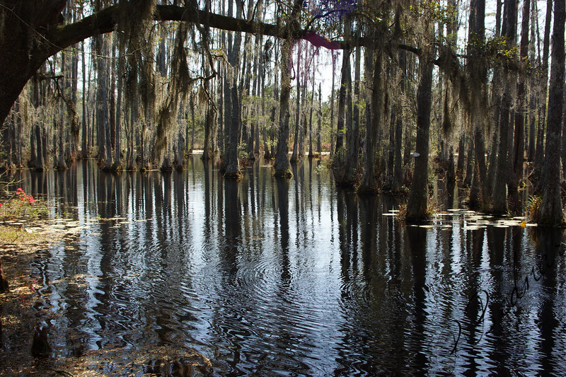 Photo By Robert Bodnar.....................The Swamp