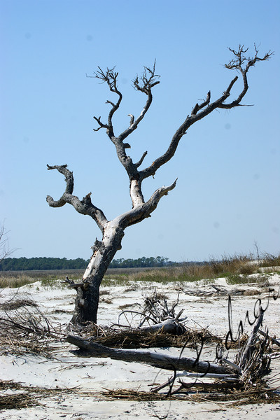 Photo By Robert Bodnar..................Lone tree Still Standing