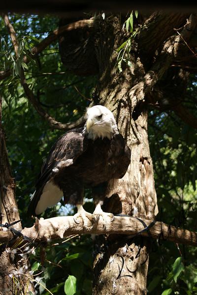 Photo By Robert Bodnar.......................Eagle