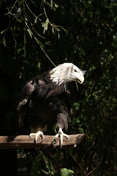 Photo By Robert Bodnar............................Eagle