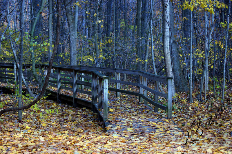 Photo By Robert Bodnar.....................Mill Hollow,  Lorain  Metro Park