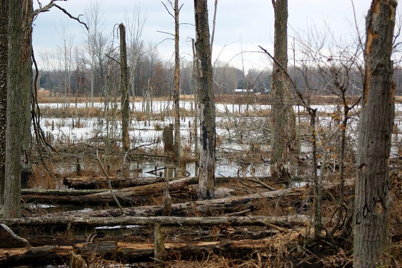 Photo By Robert Bodnar.....................Wetlands at Sandy Ridge