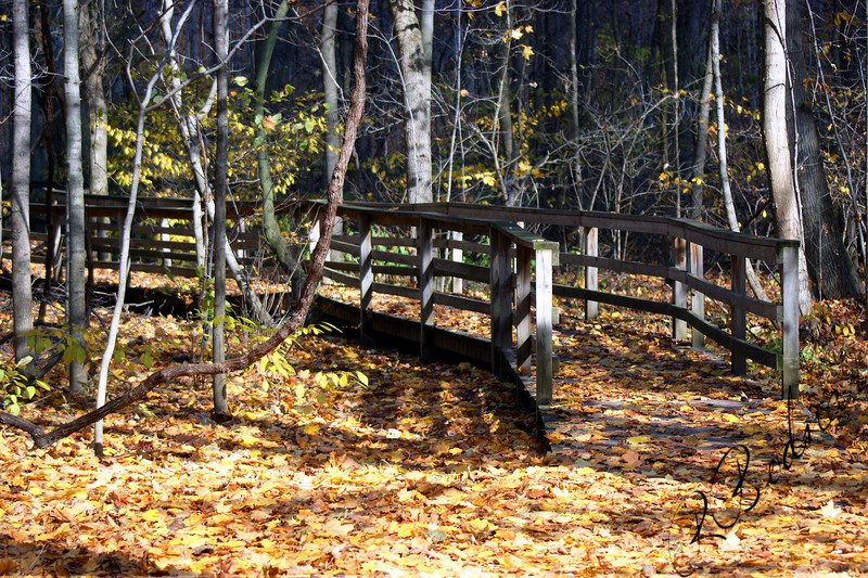 Photo By Robert Bodnar....................Trail at Mill Hollow Metro Park