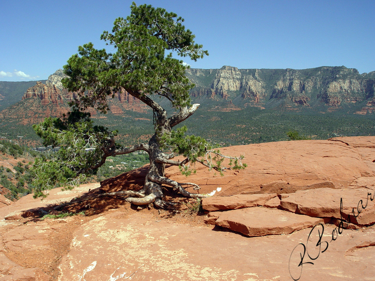 Photo By Robert Bodnar.........................................Lone Tree, On top of Rock Formation