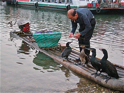 Cormorant Fisherman Along Li River