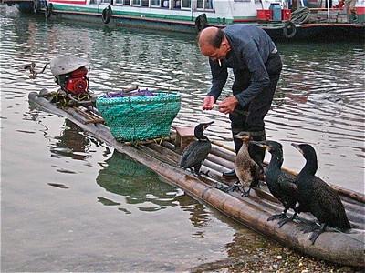 Cormorant Fisherman Along Li River