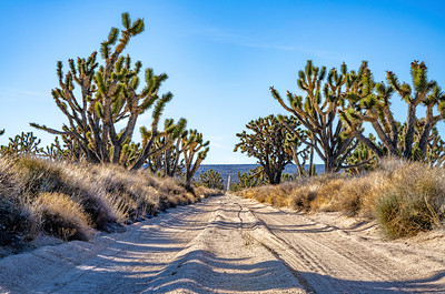 A Road (in Mojave National Preserve)