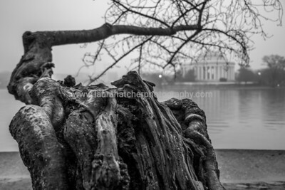 Winter Tidal Basin - 2018