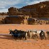 J034 - Goat Herding at Wadi Rum