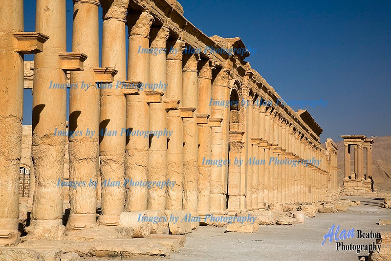Sy31-The Great Colonnade, Palmyra