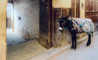 A donkey in the Fez medina.