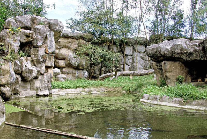 This is the lion's enclosure but where are the other lions?