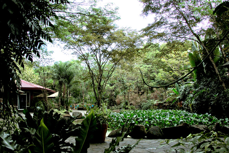 Lush vegetation and a variety of Philippine shade trees abound in the property. It has a forest like atmosphere.
