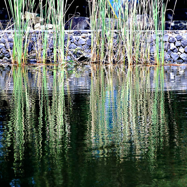 A reflection of reeds on the lake.