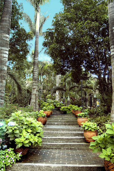 A view of the steps going up. The path is shaded by the trees and the breeze is brisk so you do not feel warm as you go up but it is humid.