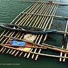 A view of one of the bamboo framework that supports the netting below the water, where the oysters are holding on to. These nettings are then raised up above water for gathering the oysters. <br /> <br /> Bamboo frameworks like these border the banks of the river that are exposed to the salt water of Guimaras Strait.<br /> <br /> This view was taken from a bridge over the Monfort River, in Dumangas, Iloilo. This is the part of the Monfort River that meets the salty waters of Guimaras Strait. Restaurants adjacent to the river on this area serve really fresh oysters. This bamboo framework supports the bambbo netting framework underwater where oysters are raised.  If you look closely a bamboo netting is raise up just below water level so they can easily pick oysters for the restaurant..