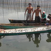 HARVESTING THE MILKFISHES, DAMPALIT, MALABON, PHILIPPINES