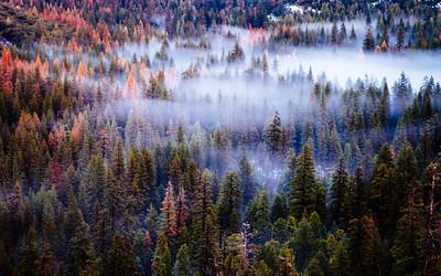 Settling Fog, Vosemite Valley