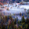 Settling Fog, Vosemite Valley