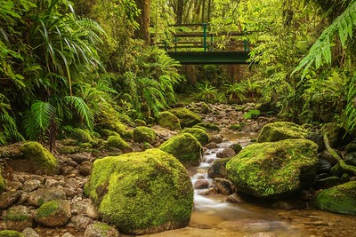 Long exposure of a small stream running between mossy boulders in a lush rainforest, with a wooden bridge in the background, in Kahurangi National Park on the South Island of New Zealand.