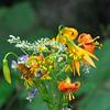 Lakes Basin National Recreation Area wild flowers