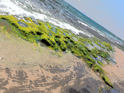 Cape Verde beach, with weed/algae on rocks providing constant food for the bird life. Utilised the Key Line art filter on this shot which brought out spectacular colour.