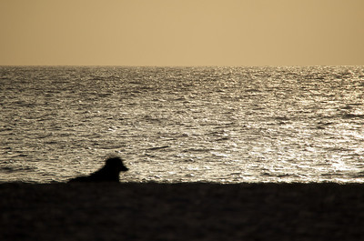 Sunsets on Cape Verde are special. So good even the dogs lie on the beach and watch. This was a great shot shooting into the low sun light capturing the dog silhouette.