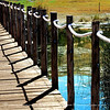 The beautiful light and the nice marsh areas at the fringe of the lake keeps my artistic juces flowing. This is the handrail and the boarddwalk floor.