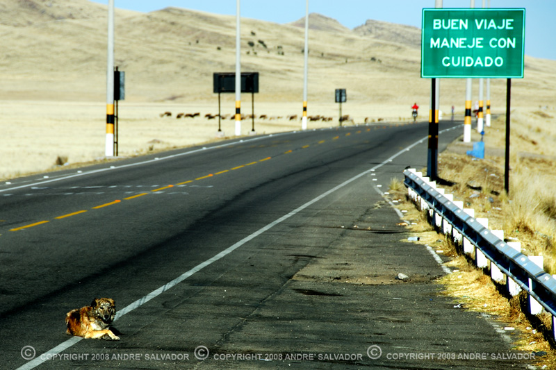 A lazy part of town in the high plains of the Andes. This dog does not even care.
