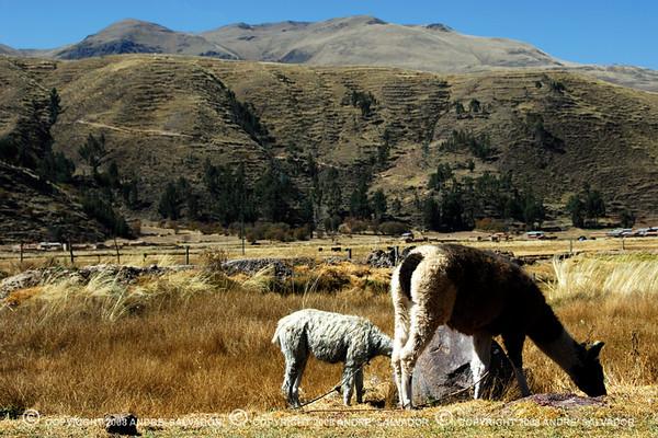 THE ALTIPLANO OR HIGH PLAINS OF PERU