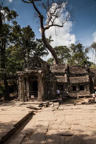 Ta Prom temp at Angkor Wat