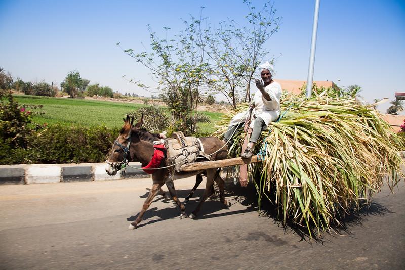 Sugarcane transport outside Luxor