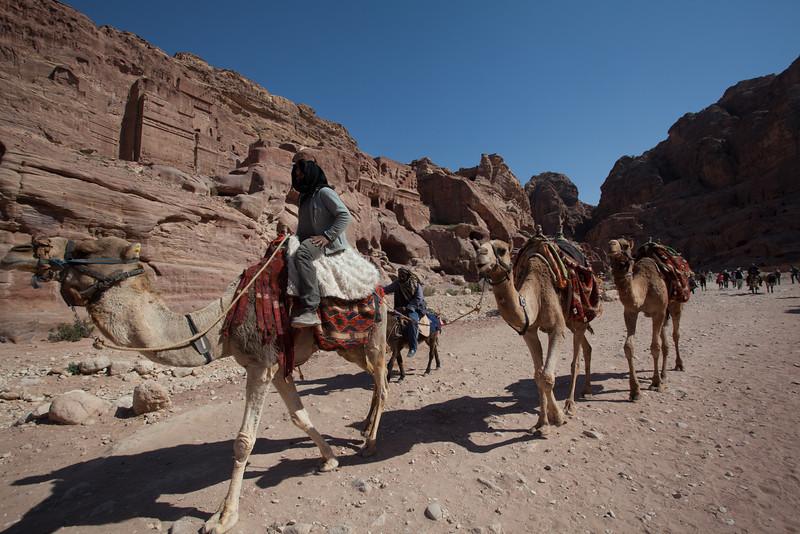 renta camel at Petra