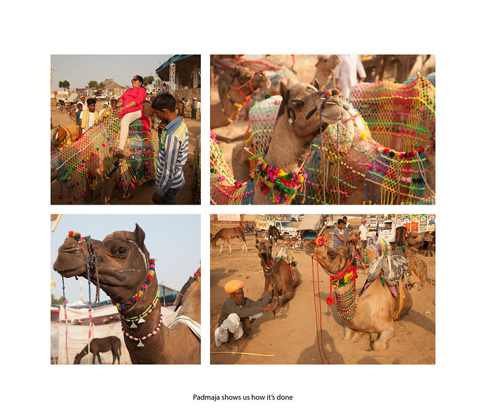 India large landscape book 2016 Page 26-2-1026SM