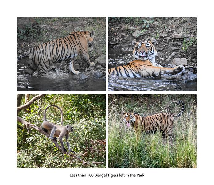 India large landscape book 2016 Page 50-2-1050SM