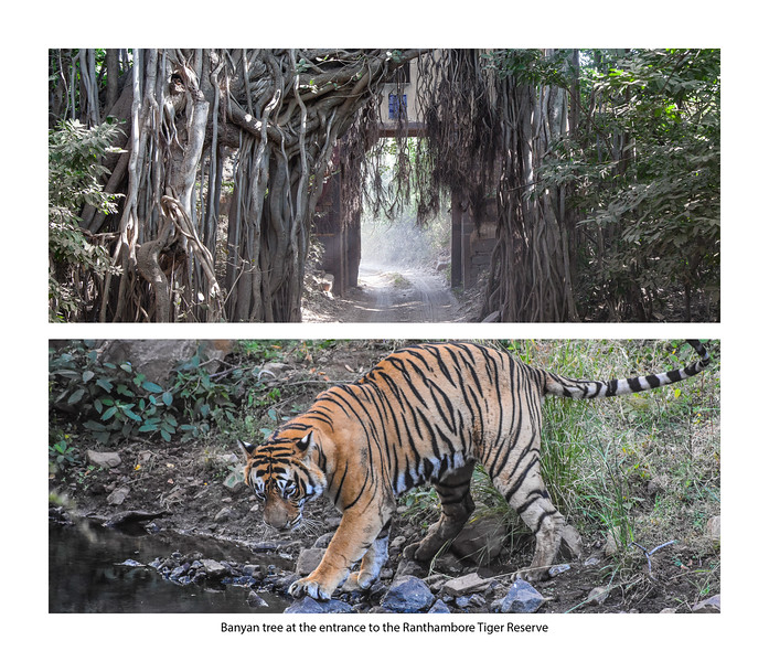 India large landscape book 2016 Page 49-2-1049SM