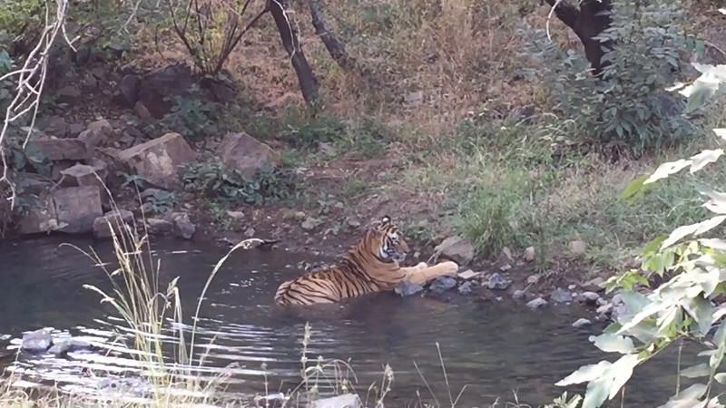 Bev's Tiger Reserve