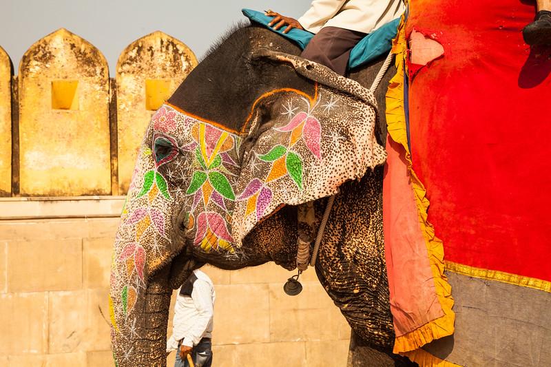 India 2016_MG_06898-1001SM