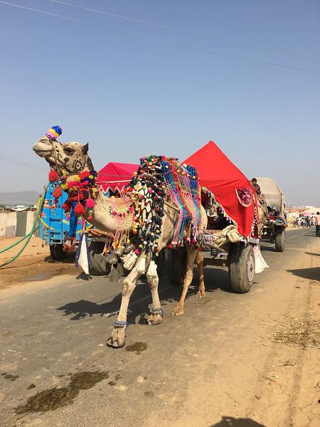 India 2016IMG_943445-1031SM