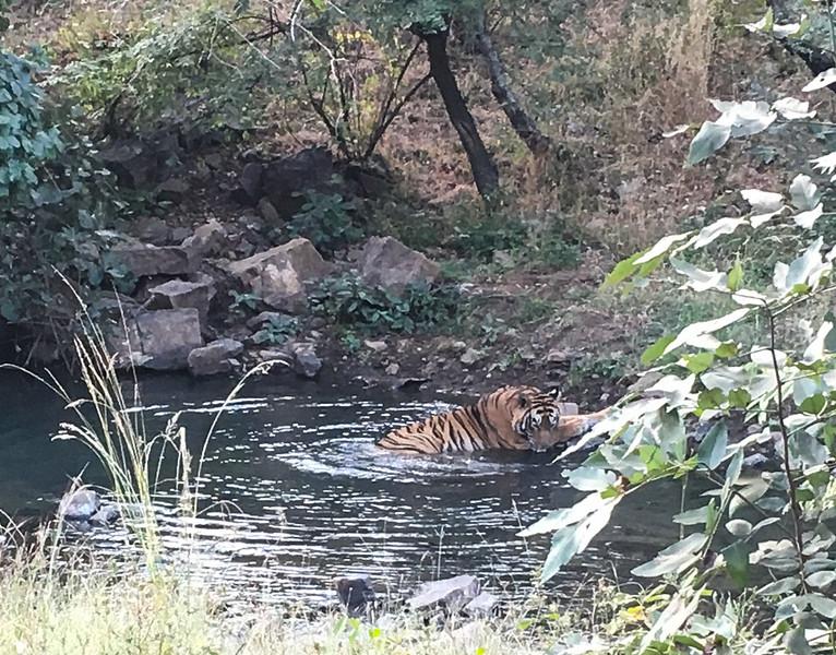 India 2016IMG_965661-1046SM