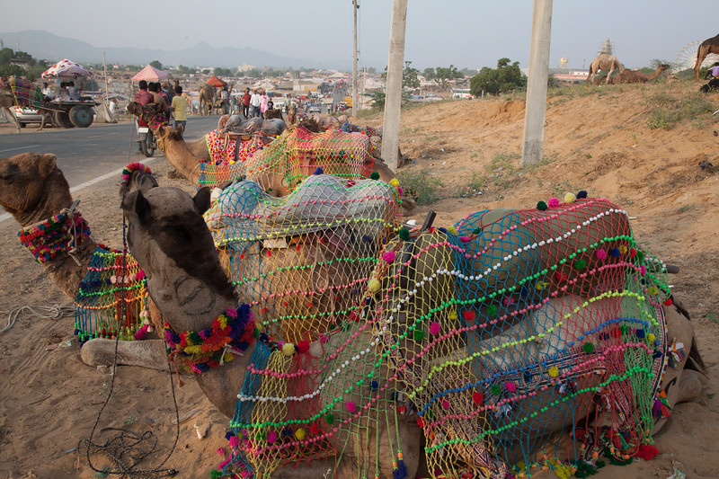 the camel taxi stand in Pushkar
