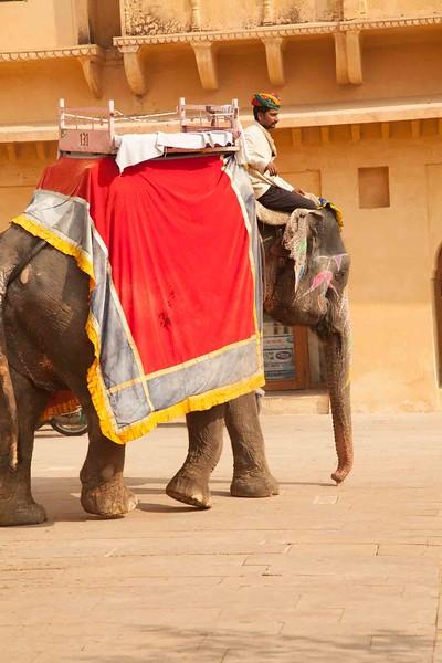 India 2016_MG_06877-1008SM